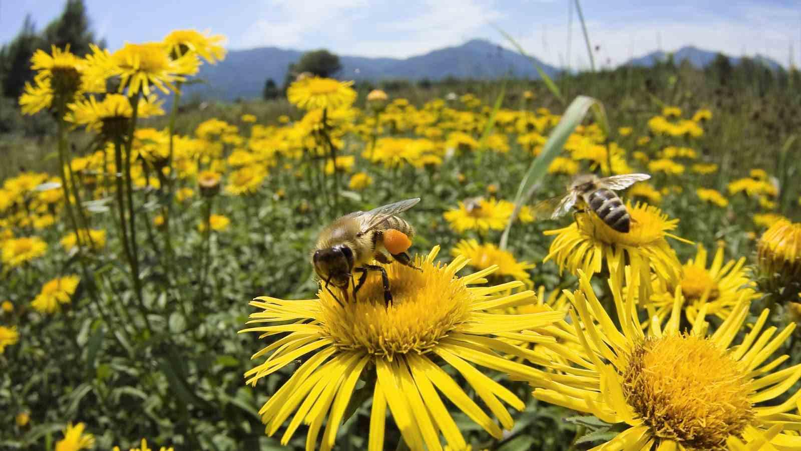 arı-ve-mucizesi-nedir